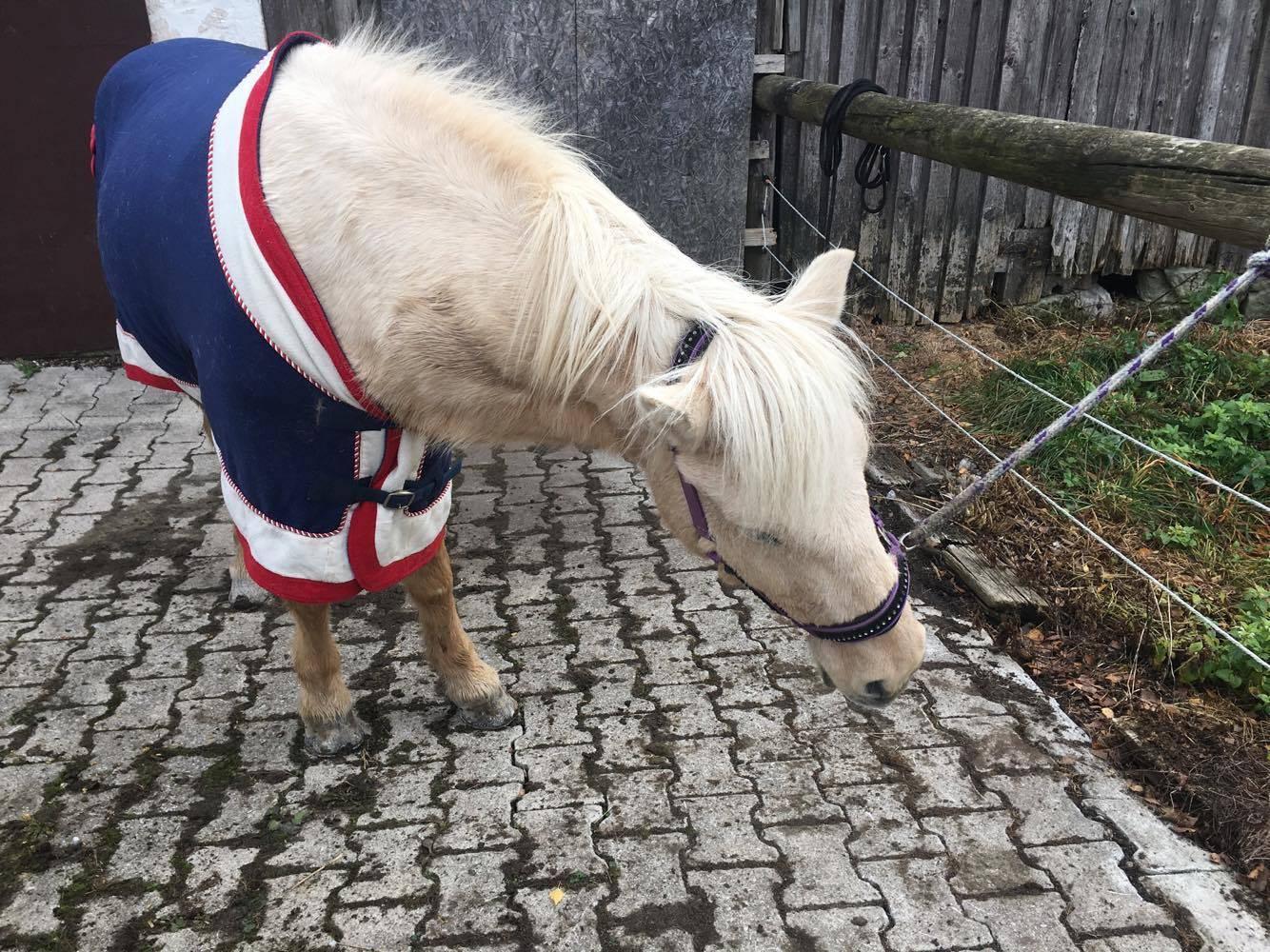 Pferde-Zahnarzt-Islandpferde-Blog-Pferd
